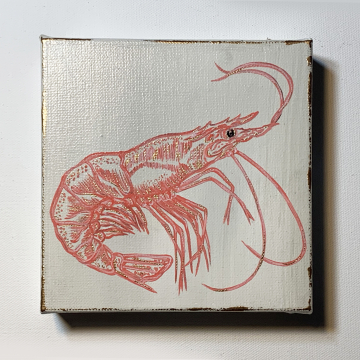 Shrimp, hand painted, pink and coral, 6x6